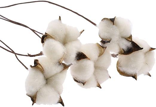 Kesheng 5pcs Flores de Algodón Secas con Ramas de Longitud 60cm para Decoración de Fiesta de Boda Hogar y Hotel: Amazon.es: Productos para mascotas