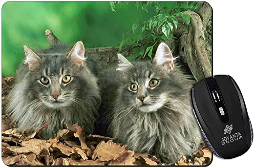 Blue Norwegian Forest Cats Computer Mouse Mat Pad Amazon Ca Home Kitchen