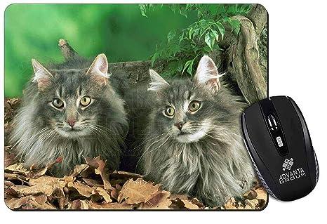Blu Gatti Norvegesi Delle Foreste Tappetino Mouse Del Computer Pad