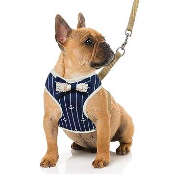 Amazon.com: Arnés y correa para perros pequeños RYPET, arnés ...