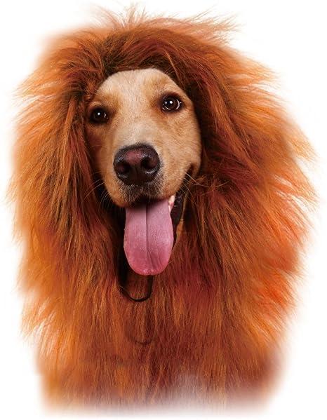 Petcute Lion Criniere Perruque Pour Chien Drole Halloween Chien Costume Cosplay Noel Festival Amazon Fr Animalerie