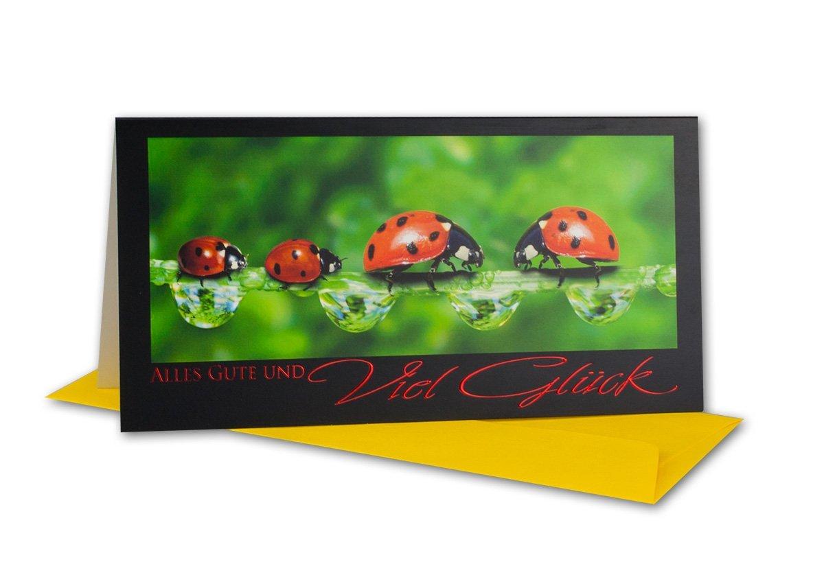 30x Glückwunsch-Karten Glückwunsch-Karten Glückwunsch-Karten Set mit Umschlag I Falt-Karten mit Prägung für jeden Anlass I DIN Lang 22,0 x 11,0 cm B07G3B1F19 | Auktion  75096d