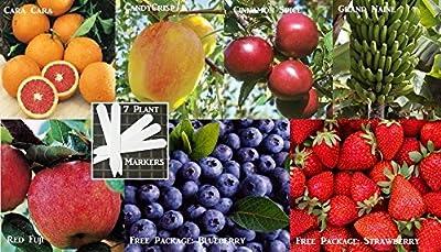 Plenty Fruit Combo Pack Lemon Tree, Banana Tree, Strawberry, Apple Tree, Blueberry (Organic) 295+ Seeds 648620998194 Self Fertile + 7 Free Plant Marker
