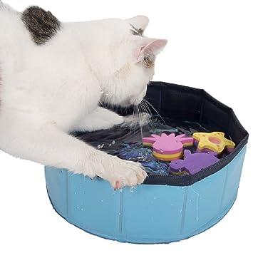 Kitty piscina plástico barato gato jugar juguetes ahorro de espacio plegable diseño: Amazon.es: Productos para mascotas