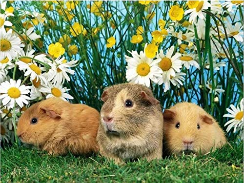 Whjkl Adults' Paint-by-Number Kits DIY Diamond Painting Guinea Pig 3D Embroidery Cross Stitch Kits Drill Mosaic Rhinestone Painting Cute R 40X50Cm