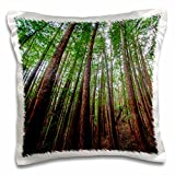 3D Rose Forest Scene in Muir Woods State Park CA Pillow Case, 16'' x 16''