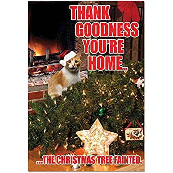 b2546xsg box set of 12 box of tree faintedcat christmas cards funny christmas card