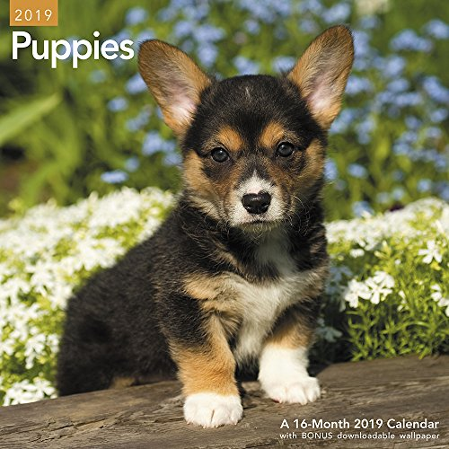 Puppies Wall Calendar (2019)