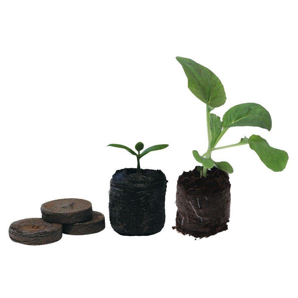 Jiffy 7 bolitas de turba semillas creciente jardinería planta 100 unidades 24 mm: Amazon.es: Jardín