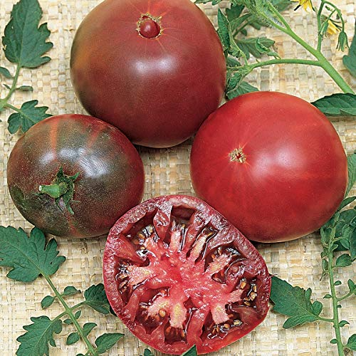 Burpee Black Krim' Heirloom Beefsteak Slicing Tomato, 3 Live Plants | 2 1/2