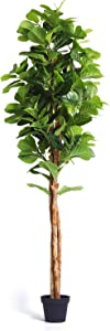 Homelux Theory Fiddle Leaf Fig Tree Artificial Plant Decor   Treated REALWOOD Unique Shape   Looks Real & Natural   Home, Store, Office, Any Space. Tall Fake Tree Ficus Tree Faux Plant (7 FT, 3 Stem)