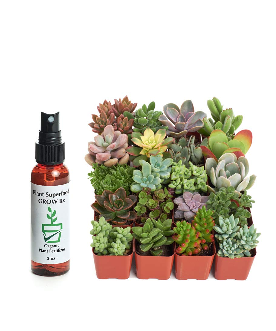 Shop Succulents | Unique Collection of Live Succulent Plants, Hand Selected Variety Pack of Mini Succulents w/Organic Plant Food/Fertilizer | Collection of 20