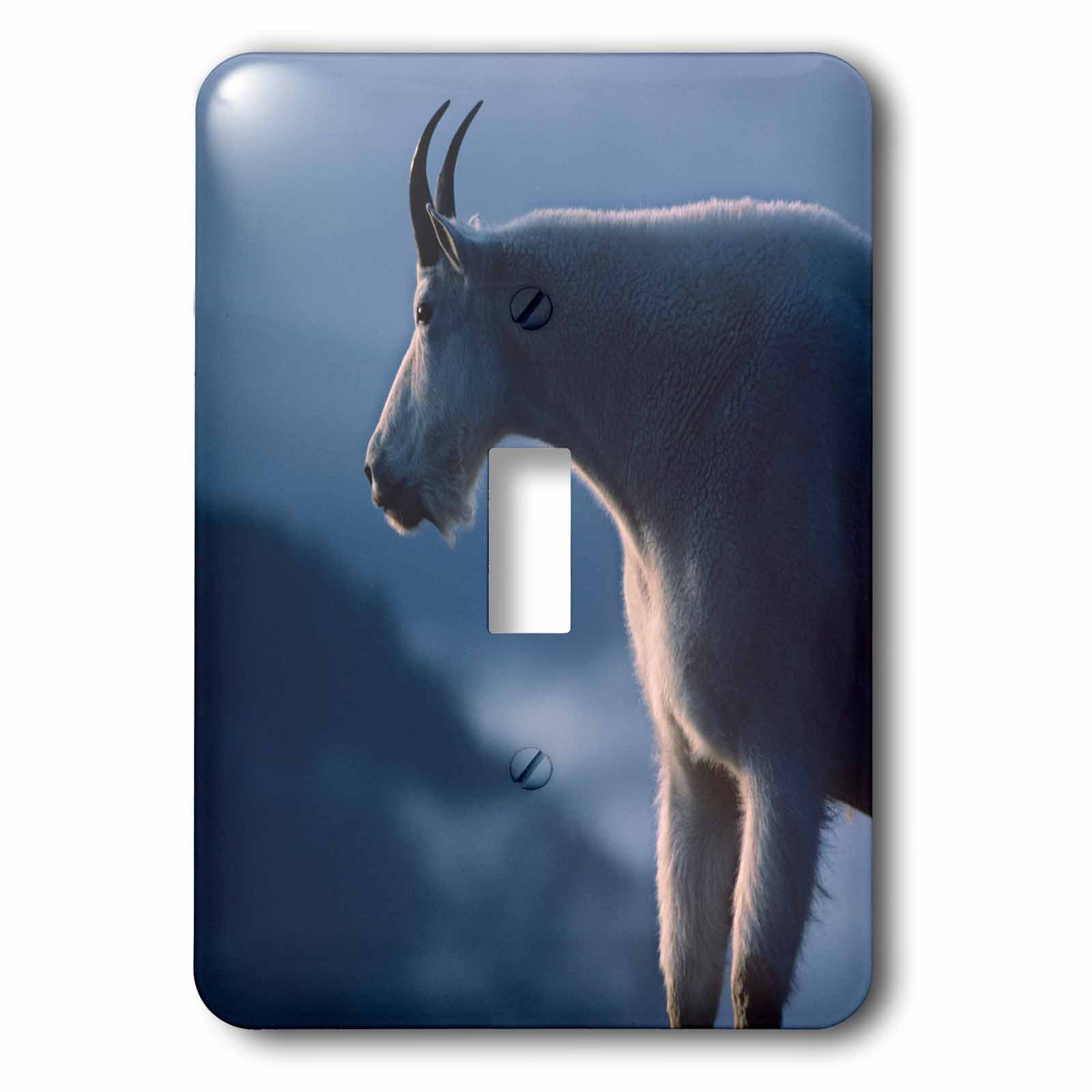 3dRose LSP_260694_1 Mountain Goat, Oreamnos Americanus, Portrait, Wyoming, USA Toggle Switch, Multicolor by 3dRose