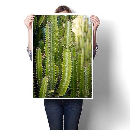 Amazon.com: Anniutwo Wall hangingGreen Cactus Growing in ...