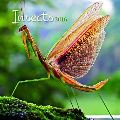 Turner Insects 2016 Wall Calendar (8940028)