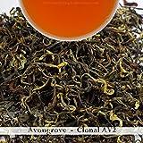 2017 AV2 Cultivar | Darjeeling 2nd Flush Tea | 500gm (17.63oz) | Pure Oragnic Tea from Avongrove | Bulk Wholesale Pack | Darjeeling Tea Boutique