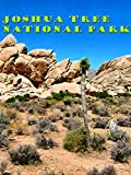Clip: Joshua Tree National Park