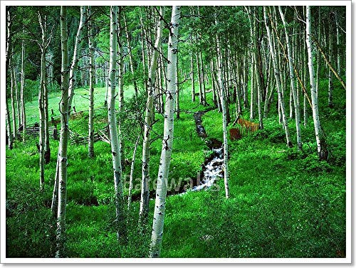 (Aspen Grove Ranch, Maroon Bells Wilderness Area, Colorado Paper Print Wall Art (24in. x 32in.))