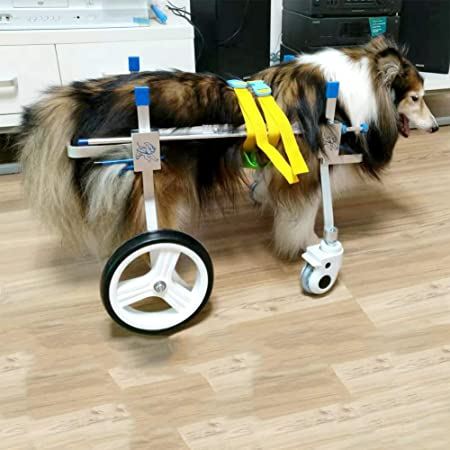 silla ruedas perro amazon