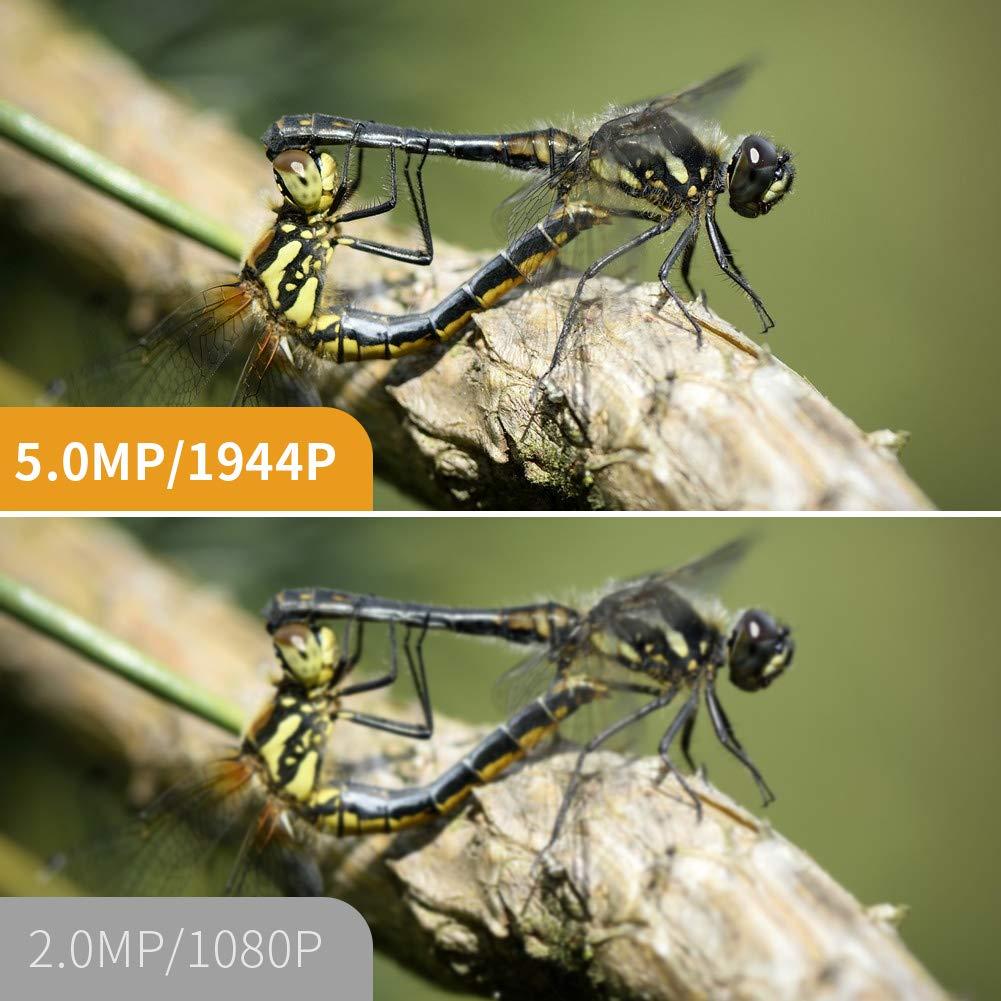 Nuovo atterraggio 5 MP Auto Focal 1944P 3 in1 USB Endoscopio Camera Impermeabile IP68