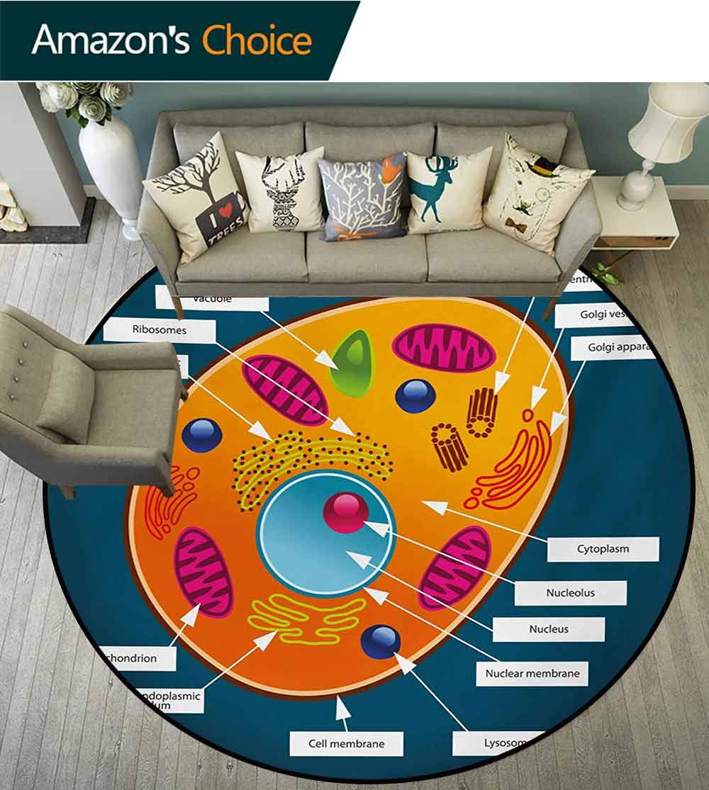 RUGSMAT Educational Modern Washable Round Bath Mat,Science at School Cell of an Animal Colorful Display Medical Studies Nucleus Non-Slip Bathroom Soft Floor Mat Home Decor,Round-63 Inch