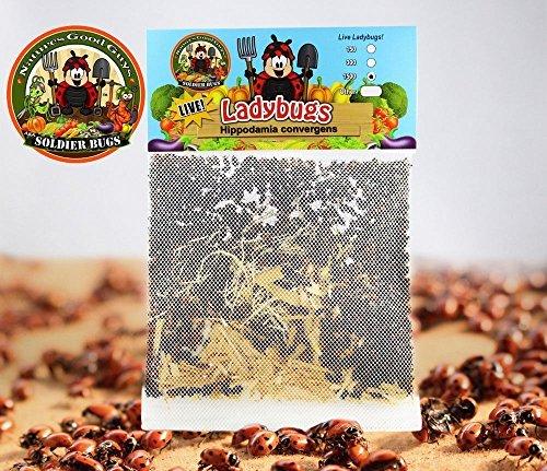 1500 Live Ladybugs – Good Bugs – Ladybugs – Guaranteed Live Delivery!