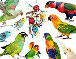 Foraging & Shredding Delight Box Pinatas for Small Birds up to Conures