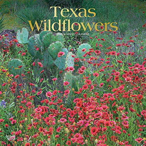 Texas Wildflowers 2020 12 x 12 Inch Monthly Square Wall Calendar with Foil Stamped Cover, USA United States of America Southwest State -