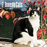Tuxedo Cats 2018 12 x 12 Inch Monthly Square Wall Calendar, Animals Cats Feline