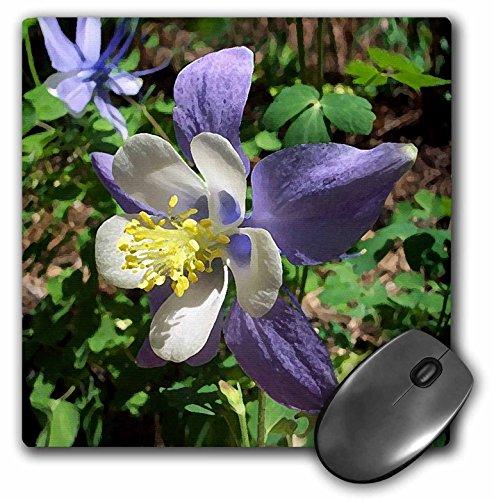 (3dRose LLC 8 x 8 x 0.25 Inches Columbine Flower Mouse Pad (mp_4189_1))