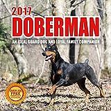 2017 Doberman Calendar- 12 x 12 Wall Calendar - 210 Free Reminder Stickers