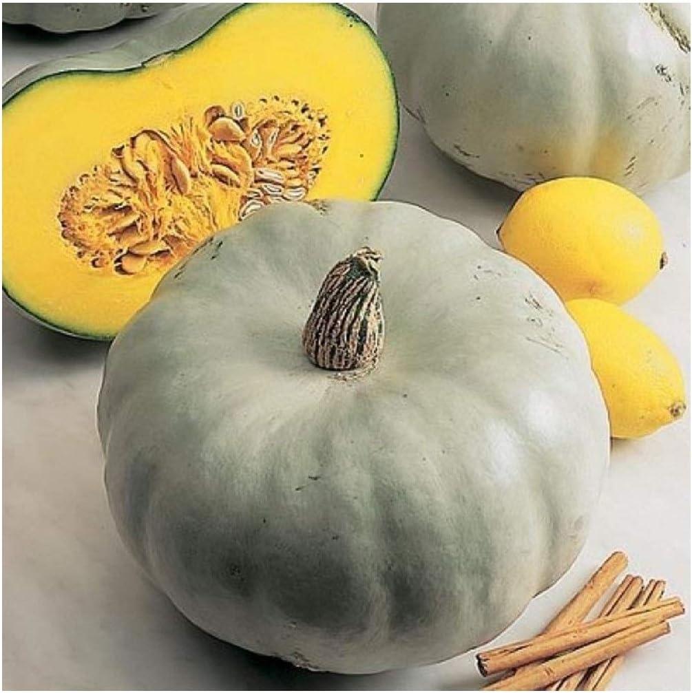 Pack of 20 Premier Seeds Direct RL-2ZKF-0NM3 Squash Crown Prince//Sweet Meat Seeds