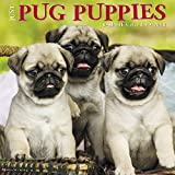 Just Pug Puppies 2018 Calendar