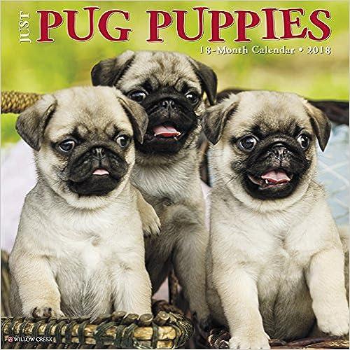 Just Pug Puppies 2018 Calendar