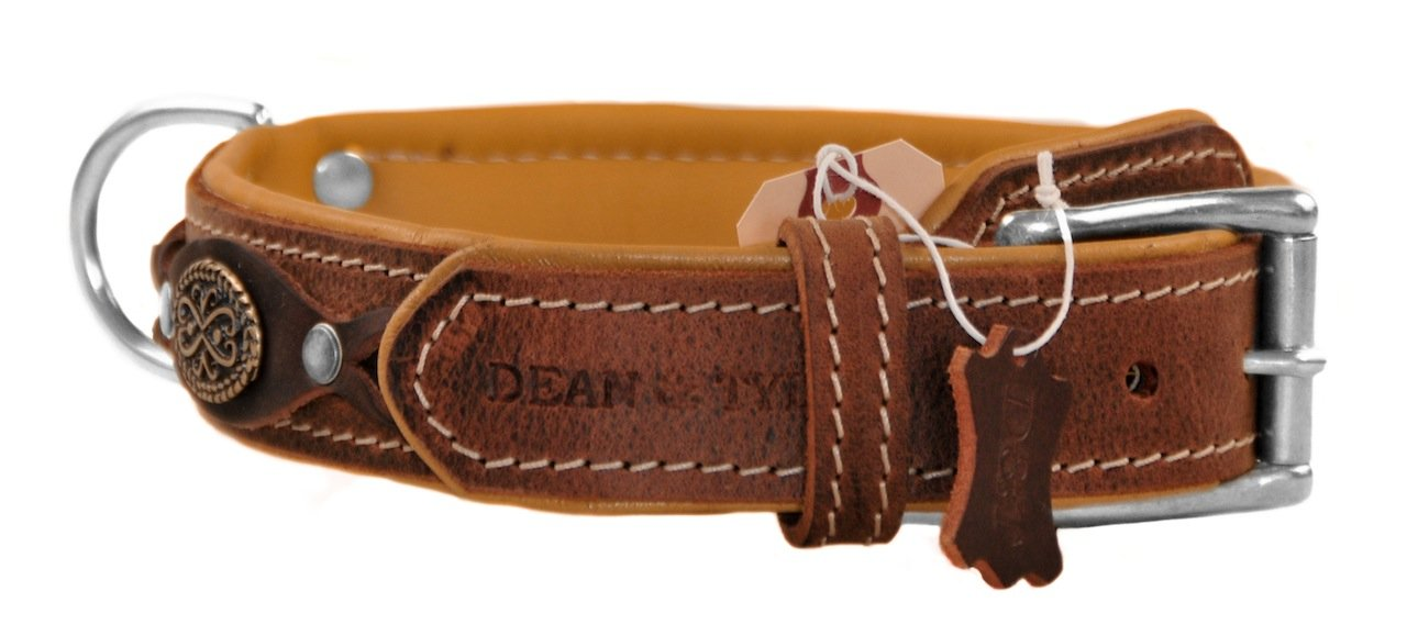 Dean & Tyler Dean's Legend Dog Collar with Brown Padding and Chrome Plated Steel Hardware, 30 by 1-1 2-Inch, Brown