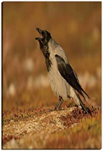 Cawing Hooded Crow Corvus cornix Wall Art Decor for Living Room,090029 Bathroom Pictures Wall Decor,8''Wx12''H
