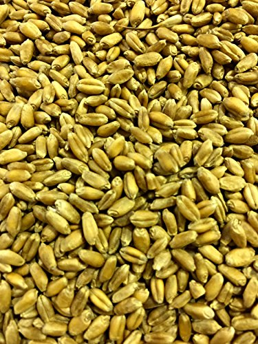 Non-GMO, Thunder Acres Premium Wheat Seed, Cat Grass Seed, Wheatgrass, Hard Red Winter Wheat (2 lbs.) by Thunder Acres (Image #3)