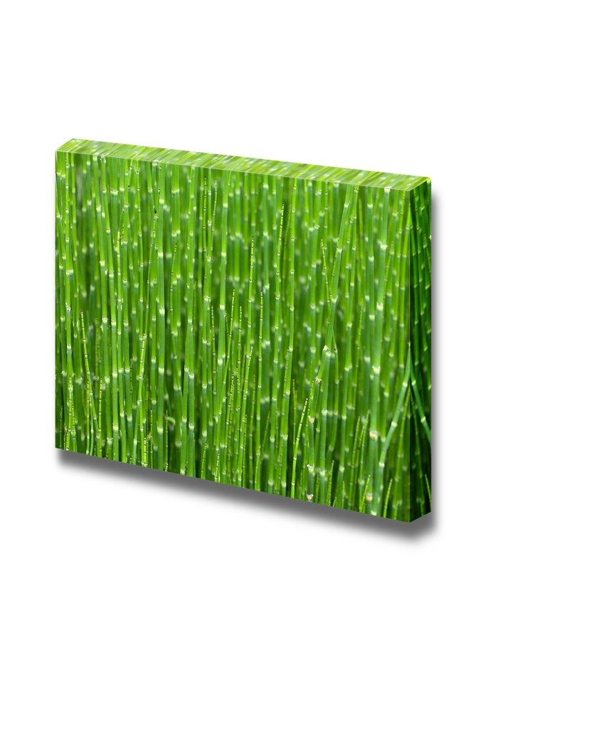 The Thicket Of Young Green Bamboo Shoots Wall Decor Ation Canvas
