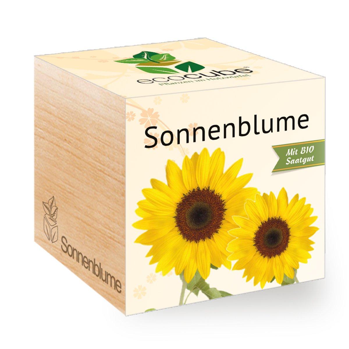 Sonnenblume im Holzwürfel Ecocube