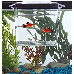 Fish & Aquatic Supplies Dip & Pour Multi Purpose Container Large by TDP