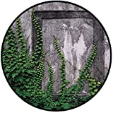Printing Round Rug,Mystic House Decor,Ivy on Wall with Aged Antique Empty Picture Frame as Window Creative Art Mat Non-Slip Soft Entrance Mat Door Floor Rug Area Rug For Chair Living Room,Green Charco
