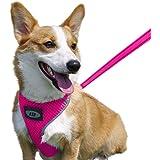 AIR - Juego de arnés para perro, arnés de correa para cachorro, arnés para perro, arnés de malla para perro, arnés cómodo par
