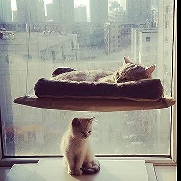 Chat Fenêtre Montée Fenêtre Chat Kitty Perchstrong Et Durable Cat