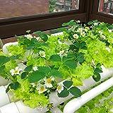 LAPOND Hydroponic Grow Kit,3 Layers 108 Plant Sites