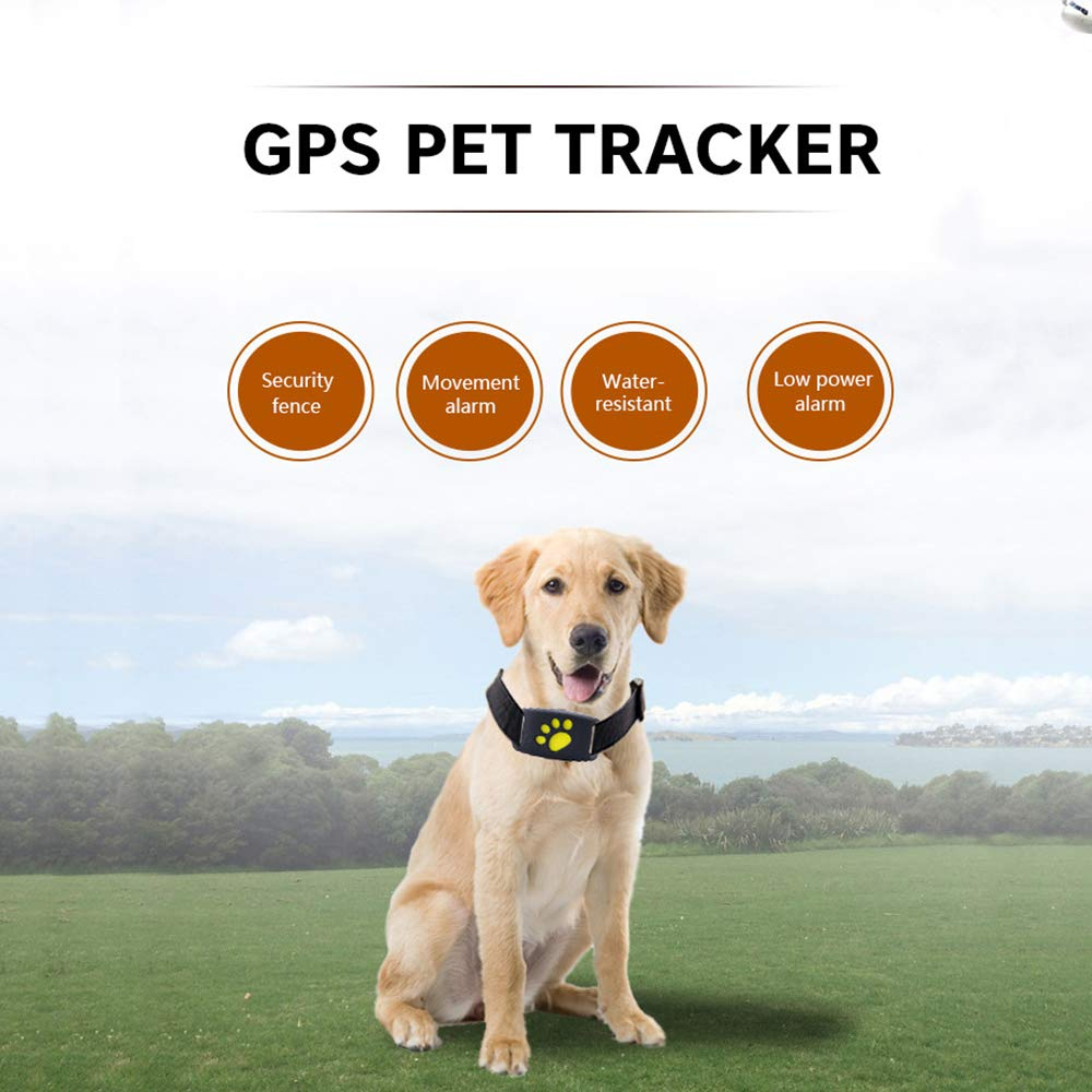 Amazon.com: AODD - Rastreador GPS para mascotas, impermeable ...