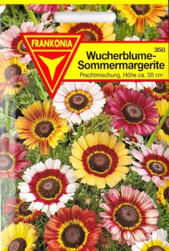 Wucherblume, Sommermargerite, Chrysanthemum carinatum, ca. 200 Samen