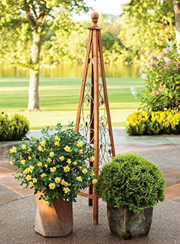 3 Gal. Oso Easy Lemon Zest Landscape Rose (Rosa) Live Shrub, Yellow Flowers by Proven Winners (Image #6)