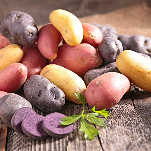 seed potatoes mix - 3