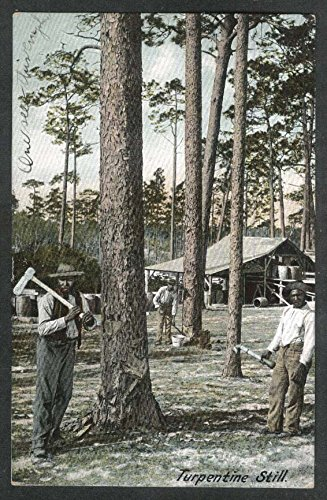 turpentine-still-woodcutters-fl-undivided-back-postcard-1907