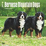 Bernese Mountain Dogs Wall Calendar 2017 {jg} Best Holiday Gift Ideas - Great for mom, dad, sister, brother, grandparents, , grandchildren, grandma, gay, lgbtq.